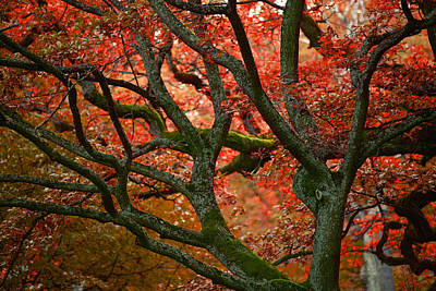Blood Red Autumn Tree Poster by Sandra Rugina