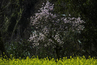 Bloosming Tree In Mustard Grass Poster by Garry Gay