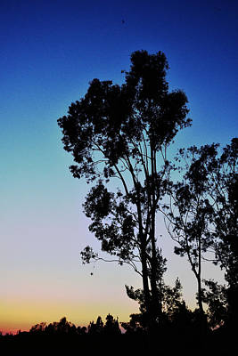 Blue And Gold Sunset Tree Silhouette II Poster by Linda Brody