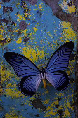 Blue Butterfly On Rusty Wall Poster by Garry Gay