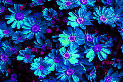 Blue Flower Arrangement Poster by Phill Petrovic