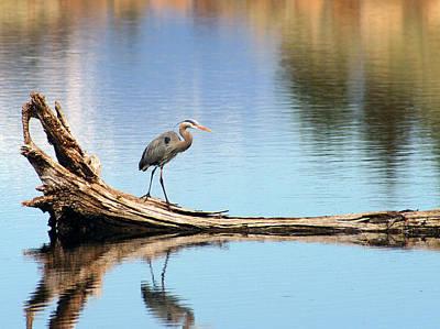 Blue Heron At Lake Shastina Poster by Jim Nelson