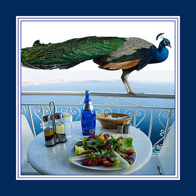 Blue Peacock Dining On The Mediterranean Sea Poster by Aisha Abdelhamid