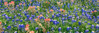 Bluebonnets And Paintbrushes Panorama - Texas Poster by Brian Harig