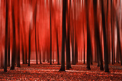 Blurry Autumn Red Poster by Sandra Rugina