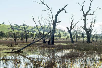 Boggy Bridge Swamp Poster by Linda Lees