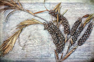 Bottlebrush Seeds Poster by Tim Gainey