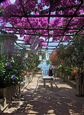 Bougainvillea Trellis Poster by Terry Pridemore
