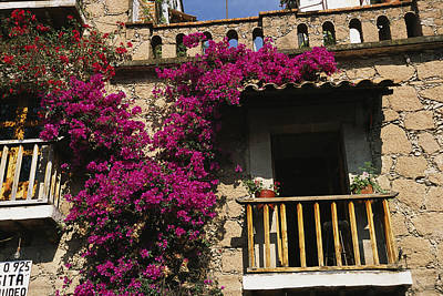 Bougainvillea Flowers On The Balcony Poster by Gina Martin