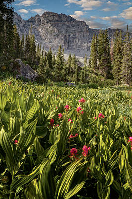 Boulders And Wildflowers In Albion Basin Poster by Utah Images
