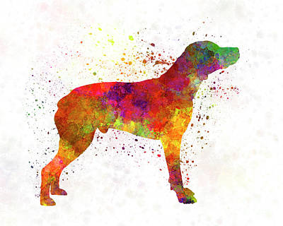 Bourbonnais Pointer In Watercolor Poster by Pablo Romero