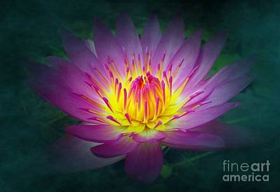 Brightly Glowing Lotus Flower Poster by Yali Shi
