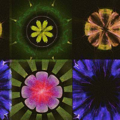 Brinish Symmetry Flowers  Id 16165-053020-45980 Poster by S Lurk