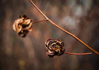 Brown Flower Seed Poster by Kathleen Scanlan