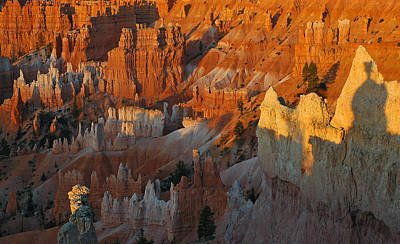 Bryce Canyon Morning Poster by Bruce Gourley