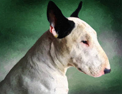Bull Terrier On Green Poster by Michael Tompsett
