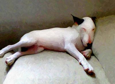 Bull Terrier Sleeping Poster by Michael Tompsett