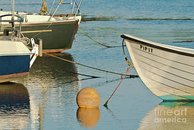 Buoy Pipit Poster by Terri Waters