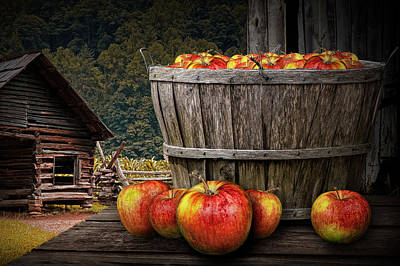Bushel Of Apples During Harvest Poster by Randall Nyhof