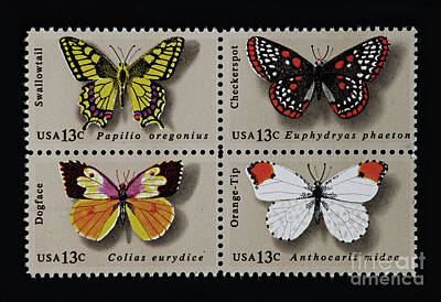 Butterflies Postage Stamp Print Poster by Andy Prendy