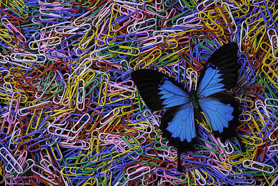 Butterfly And Paperclips Poster by Garry Gay