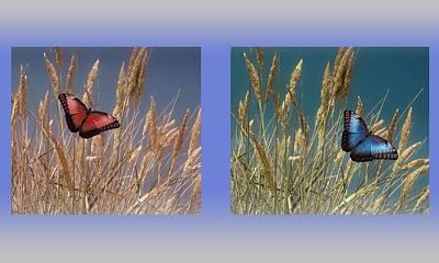 Butterfly Fields Of Grain Poster by David Dehner