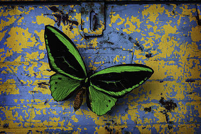 Butterfly On Old Tool Box Poster by Garry Gay