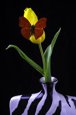 Butterfly Resting On Yellow Tulip In Vase Poster by Garry Gay