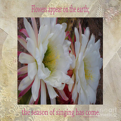 Cactus Flower Song Of Solomon Poster by Beverly Guilliams