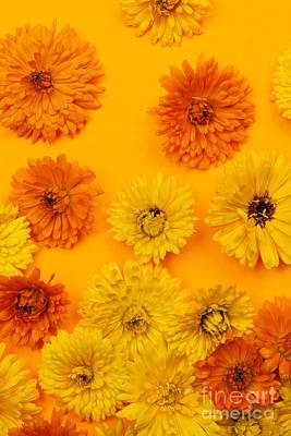 Calendula Flowers On Orange Background Poster by Elena Elisseeva