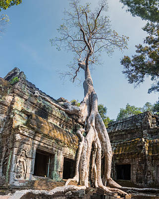 Cambodia Angkor Wat Tree Roots Poster by Cory Dewald