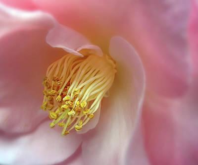 Camellia  Poster by Jessica Jenney