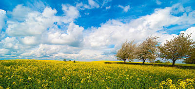 Canola Field Panorama Poster by Amanda And Christopher Elwell