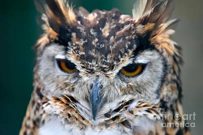 Cape Eagle Owl Poster by George Atsametakis