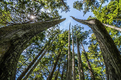 Cape Flattery Trees Poster by Pelo Blanco Photo