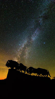 Caprock Canyon Bison Stars Poster by Stephen Stookey