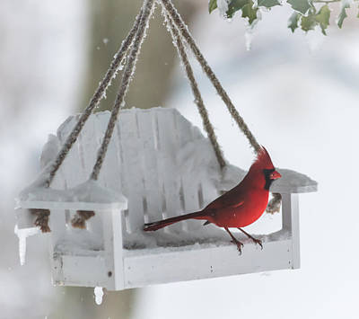 Cardinal On Swing In Snow Storm Poster by Terry DeLuco