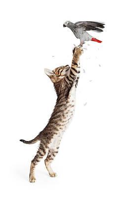 Cat Catching Bird In Flight Poster by Susan Schmitz