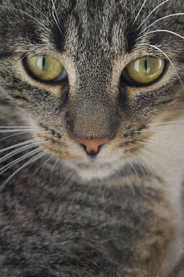 Cat Portrait Poster by Cambion Art