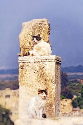 cats of Ephesus Poster by HD Connelly
