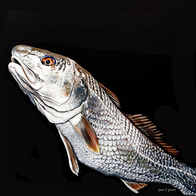 Caught In The Surf Redfish Poster by Joan Garcia