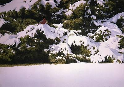 Cedar And Snow Poster by Conrad Mieschke