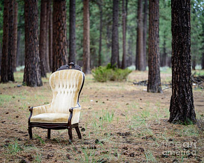 Chair In The Forest Poster by Terry Garvin