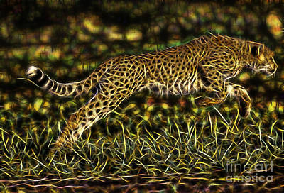 Cheetah Collection Poster by Marvin Blaine