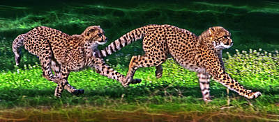 Cheetah Cub Play Time Poster by Miroslava Jurcik