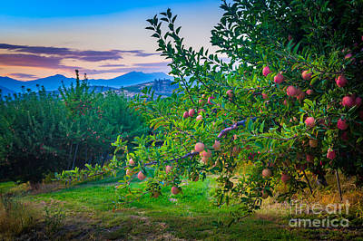 Chelan Apple Branch Poster by Inge Johnsson