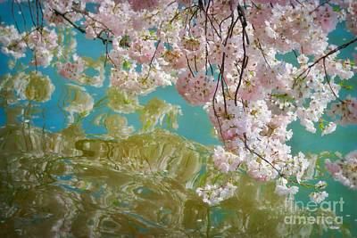 Cherry Blossoms Close Up Six Poster by Susan Isakson