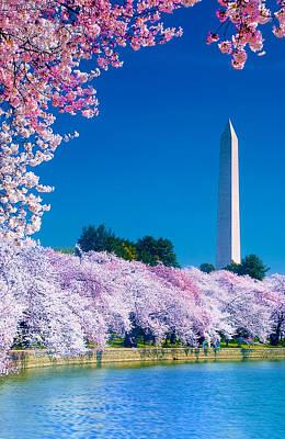 Cherry Blossoms Poster by Don Lovett