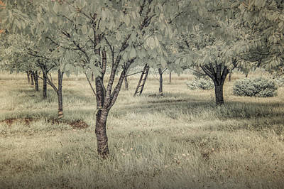 Cherry Orchard In Infrared Poster by Randall Nyhof