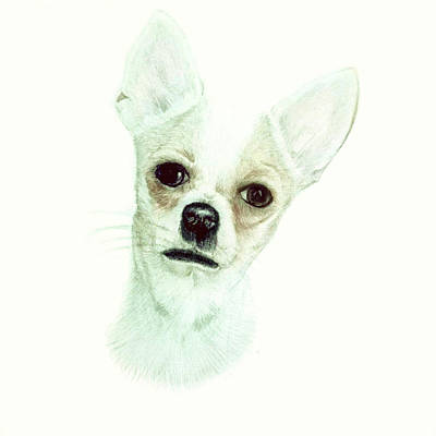 Chihuahua Phoebe Poster by Maria Boklach